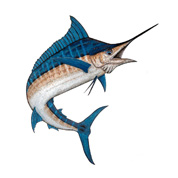 stuart fishing charters florida marlin