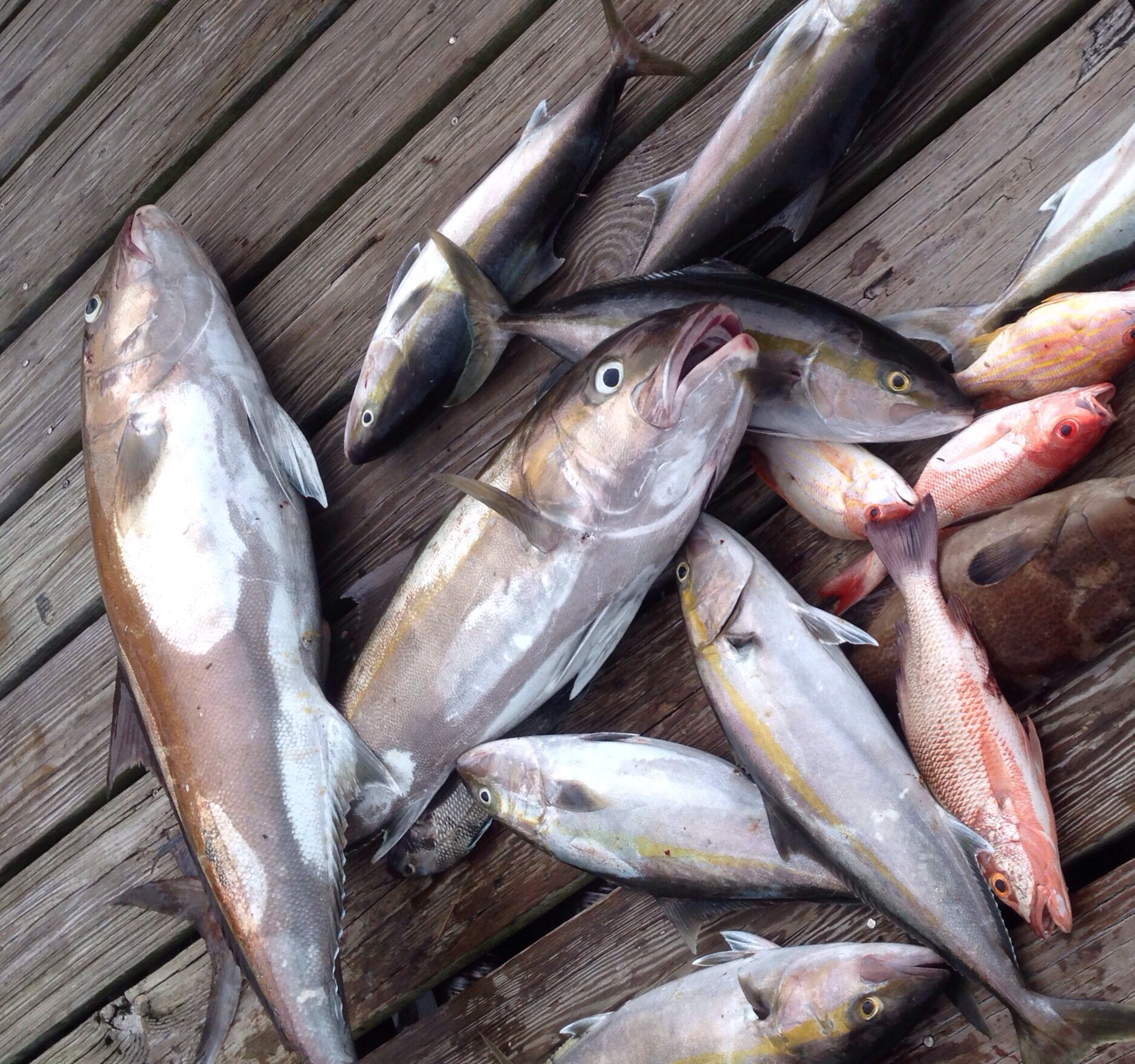 florida fishing charters catch of the day
