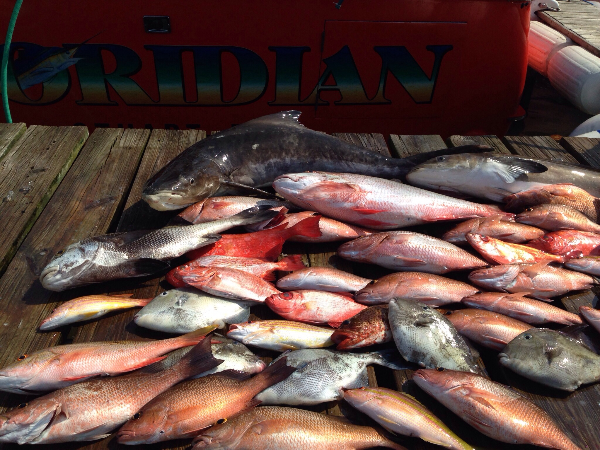 stuart fishing charters red snapper