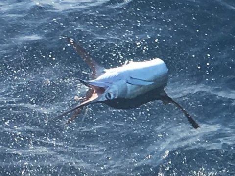 florida fishing charters marlin